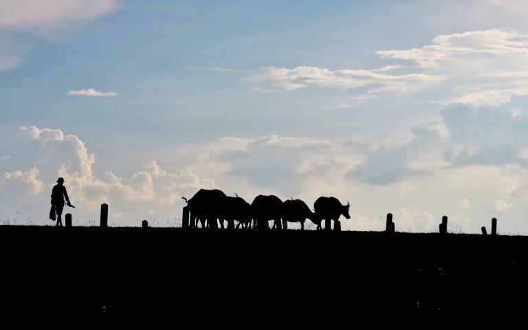 Небесный Пастух